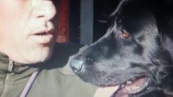 È morto Tommy, il cane eroe dell'Aquila. I vigili gli dedicano un videotributo: