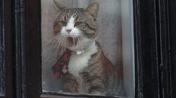 Il gatto di Assange evita l'arresto: è stato portato via prima dell'arrivo di Scotland