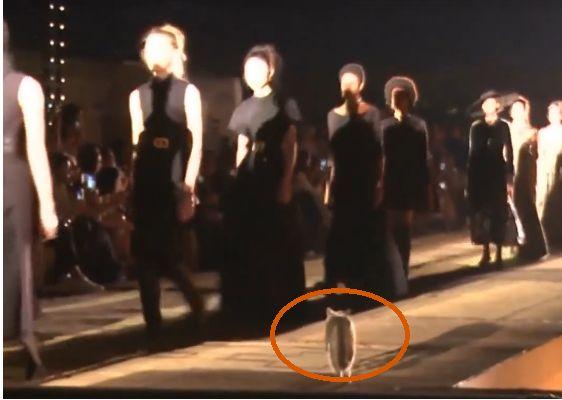 Ce chat a volé la vedette aux mannequins durant le défilé Dior à