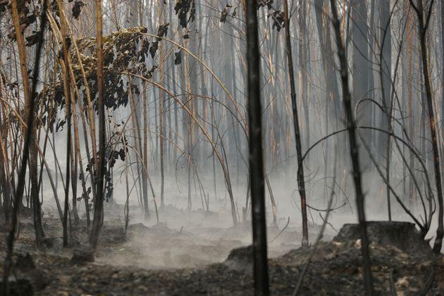 Imagen de archivo de un incendio en el norte de Españ supuestamente