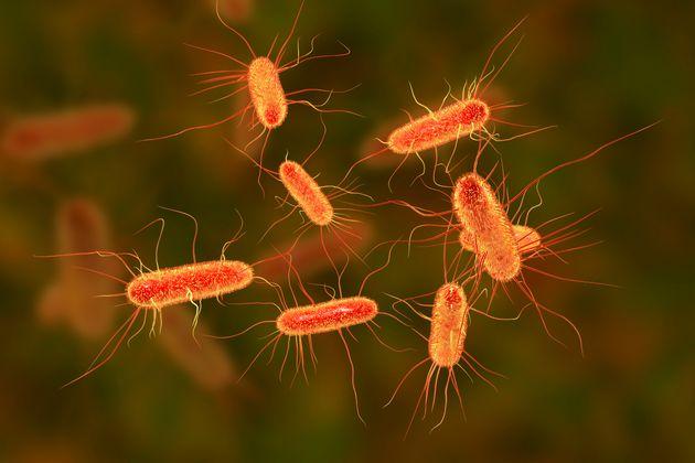 Qu'est-ce que l'E.coli, la bactérie à l'origine du retrait de fromages au lait