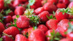 Les fraises du Québec en abondance, mais prêtes plus