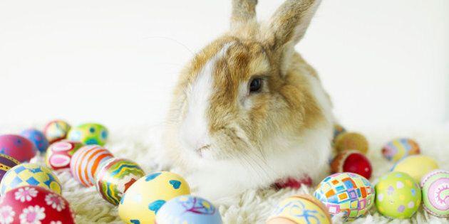 Un couple blâme le lapin de Pâques pour la fermeture de son foyer