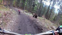 Un ours s'invite à une promenade en vélo de