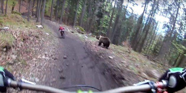 Cet ours donne la frousse à deux adeptes de vélo de montagne en