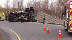 Accident sur l'A-55: un camion-remorque transportant des vaches se
