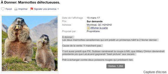 Les deux marmottes qui ont prédit un printemps hâtif sont en vente sur