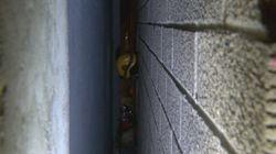 Un homme chute de 3 étages et reste coincé entre deux