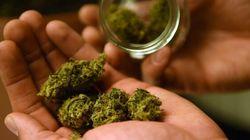 Cet homme veut devenir le «Roi du cannabis» à