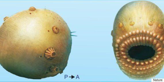Saccorhytus, notre ancêtre à grande
