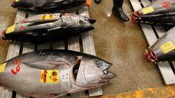 Les poissons sont pollués, mais moins
