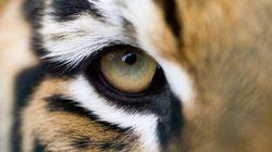 L'instinct et l'œil du
