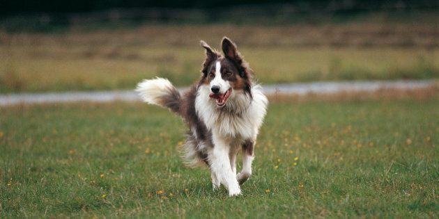 Comment protéger votre chien: empêchez les tiques de