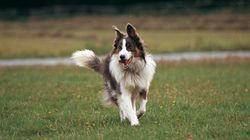 8 conseils pour les propriétaires de chiens pour éviter les