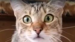 Ce chat est captivé par ce film d'horreur