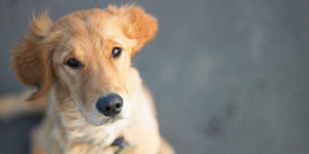 Comme les humains, les chiens distinguent mots et