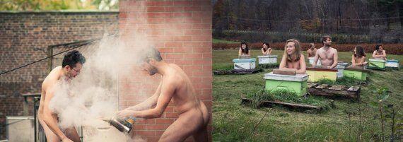 Un calendrier d'apiculteurs nus qui donne envie de se coller aux