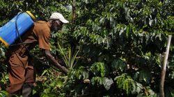 Afrique centrale : la diaspora veut redynamiser l'organisation