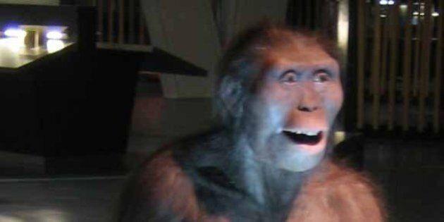 Lucy l'australopithèque est probablement morte en tombant d'un arbre selon une
