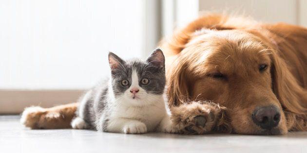 On trouve déjà des chats et des chiens fluorescents, grâce à l'introduction dans leur ADN d'un gène de