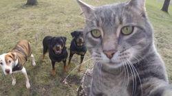 Ce chat devient une star d'Instagram avec ses selfies