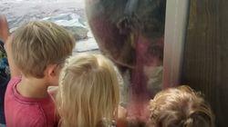 Mais pourquoi cet ours a-t-il décidé de faire caca pile sous le nez de ces