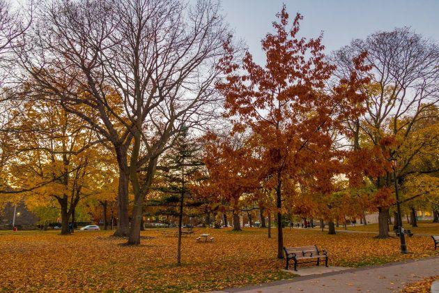 Autumn colorful vegetation of Queens Park - Toronto, Ontario,