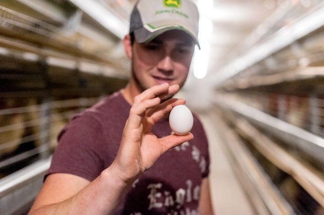 Un producteur d'œufs de la Nouvelle-Écosse prend le virage