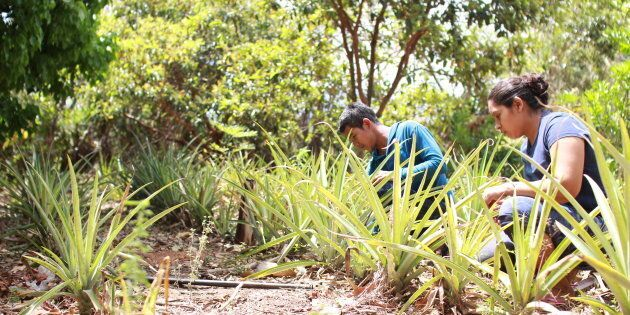Agroécologie, agriculture et aide internationale