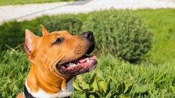 Une chienne volée au Texas est retrouvée trois ans plus tard dans un autre