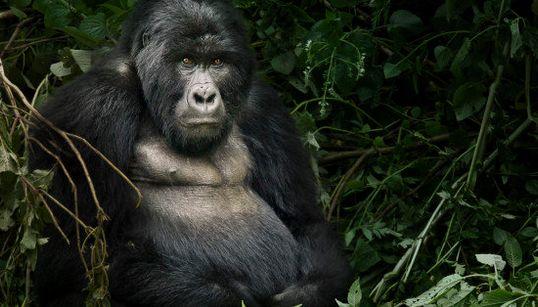 Pour le Jour de la Terre, les 10 merveilles de la nature menacées