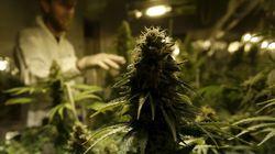 Le Mexique veut légaliser la marijuana à usage