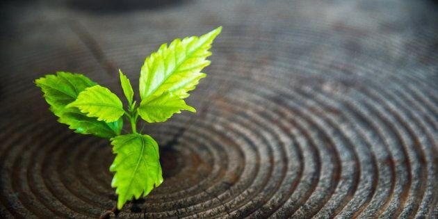 Cinq chefs de file mondiaux des énergies vertes et de la valorisation des