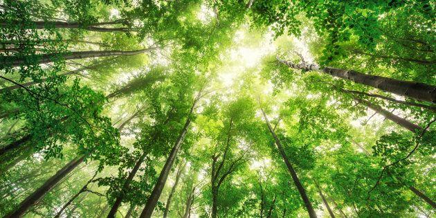 À Lanoraie, une forêt en