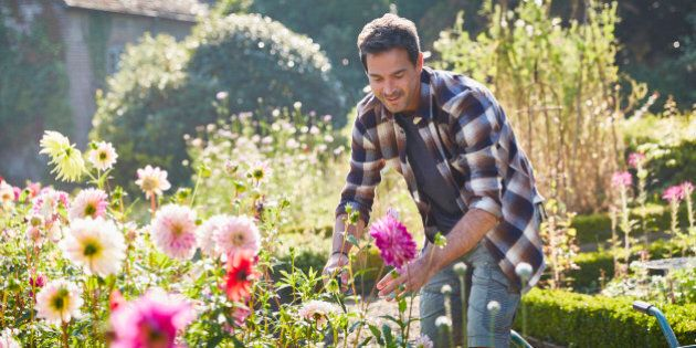 Man pruning flowers in sunny