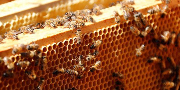 Des pesticides néfastes aux abeilles présents dans 75% du miel
