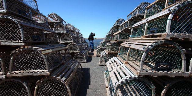 Des tonnes de homards ont été saisis à l'aéroport de