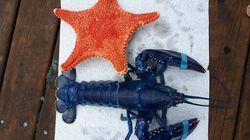 Un concours du homard le plus étrange organisé par un concessionnaire