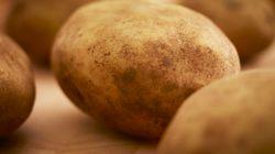 Un champ de patates vieux de 3800 ans découvert au