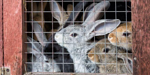 Cette association interpelle des marques de luxe sur l'élevage de lapins en batterie à travers une vidéo
