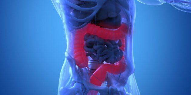 Human anatomy, colon. Xray-like view. Colon highlighted. 3d illustration.