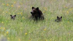 Parc Canada déplore les comportements dangereux de visiteurs avec des