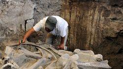 Un mammouth vieux de 14 000 ans exhumé au