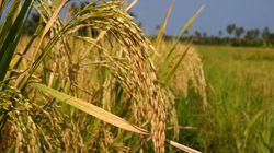 La libéralisation de l'agriculture marginalise le