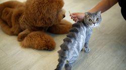 Ce salon de toilettage donne des looks incroyables aux animaux