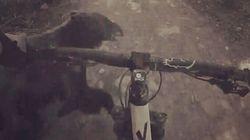 Ce cycliste percute un ours en pleine