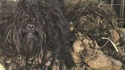 3 kilos de saletés en moins, ce chien est beaucoup plus mignon à