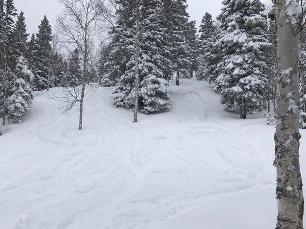 Les sous-bous du Mont Grand Fonds jeudi, avec 30 centimètres de