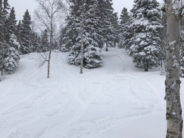 Les sous-bous du Mont Grand Fonds jeudi, avec 30 centimètres de poudreuse.