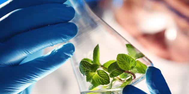 L'entreprise CO2 Solutions veut capturer du carbone de Produits forestiers Résolu pour mieux faire pousser...